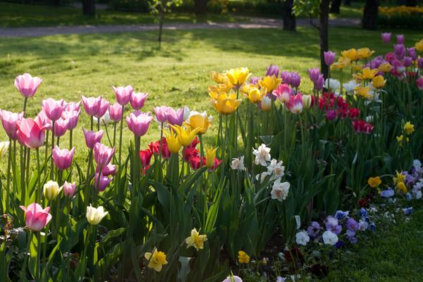Мир цветов, растений, деревьев - Страница 3 I-6047