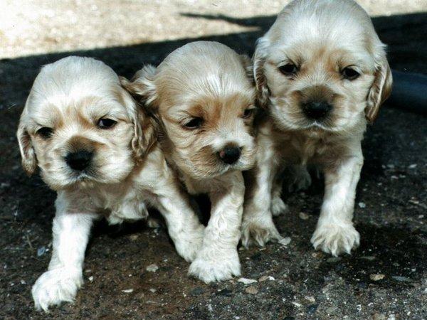 chiens_014-1.jpg