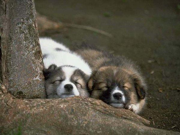chiens_017-1.jpg