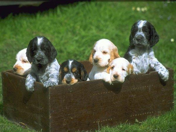 chiens_032-1.jpg