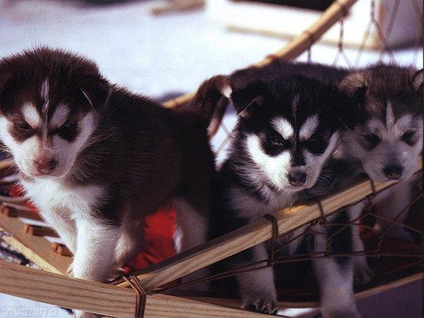 chiens_034-1.jpg