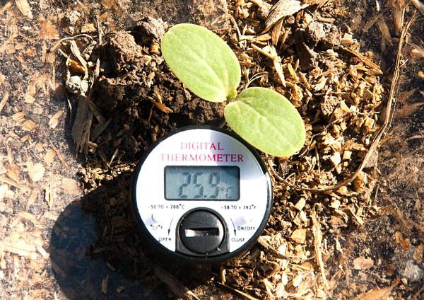 Температура почвы в агропанеле на глубине 10 см.