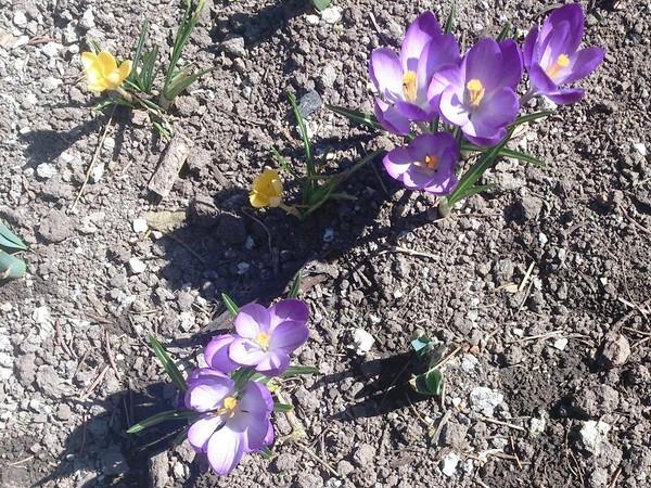 Як виглядає квітка