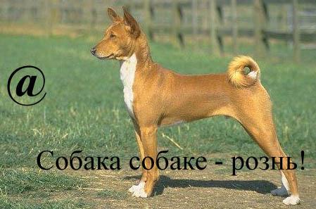 Собака собаке - рознь!
