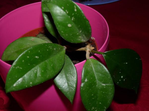 Растения — домашние растения цветы