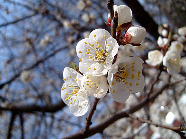 http://content.foto.mail.ru/mail/i.gordi/92/i-94.jpg