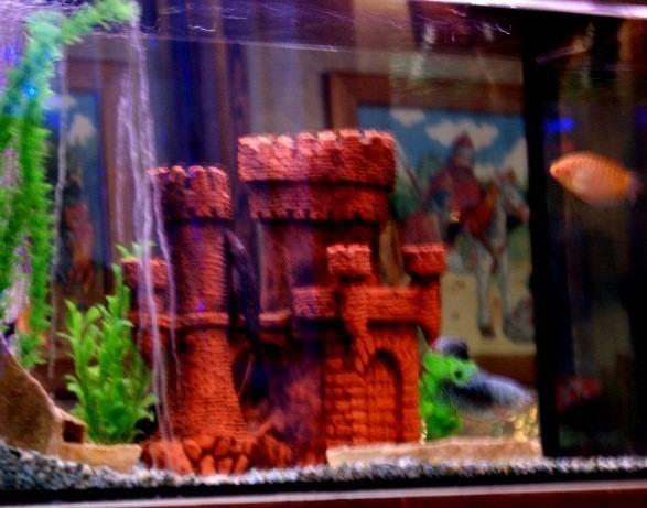 Рис.4  Замок в аквариуме