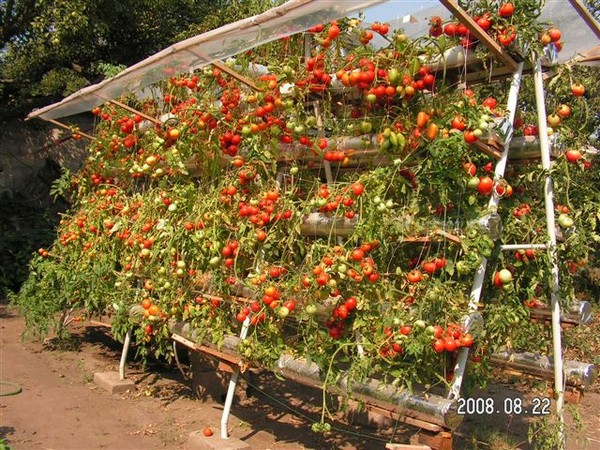 Шпалера для томатов своими руками