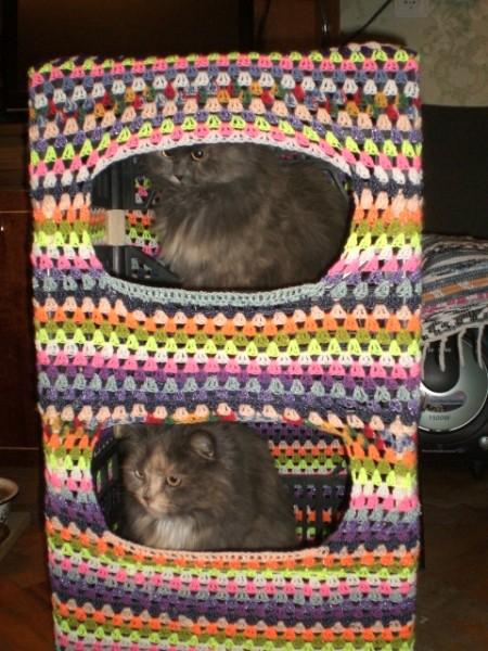 Кошкин дом с кошками