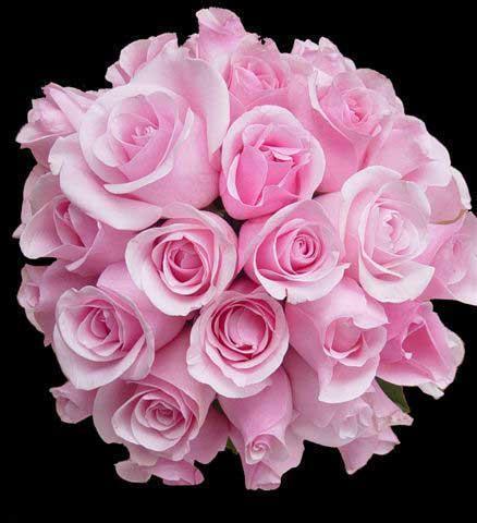 Что лучше тюльпаны или розы и почему