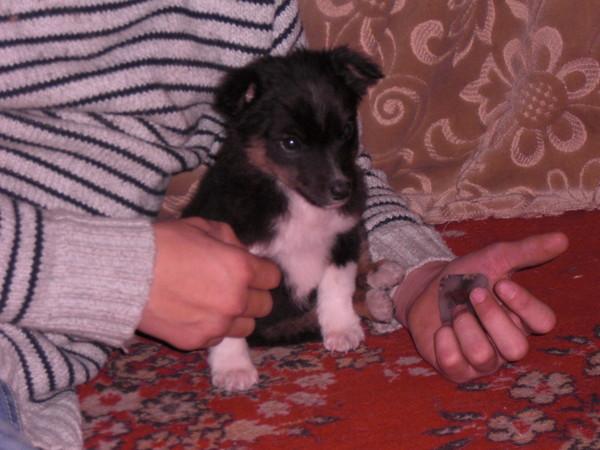 http://content.foto.mail.ru/mail/inok7/_blogs/i-356.jpg