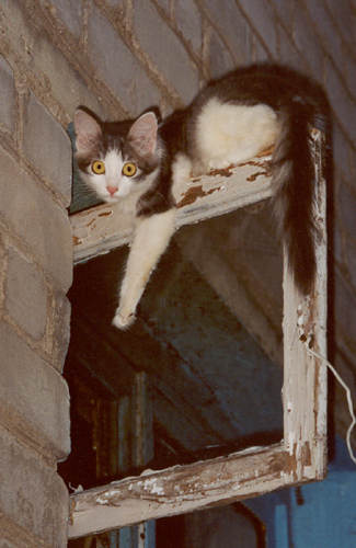 Кошки в Рыбинске попадаются на каждом шагу...