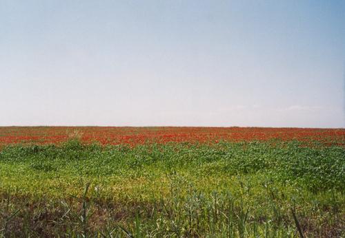 Вот такое поле по дороге из Ташкента в Самарканд