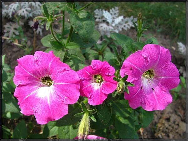 за цветок: бисероплетение