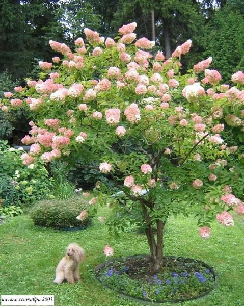 Какое дерево или куст посадить возле