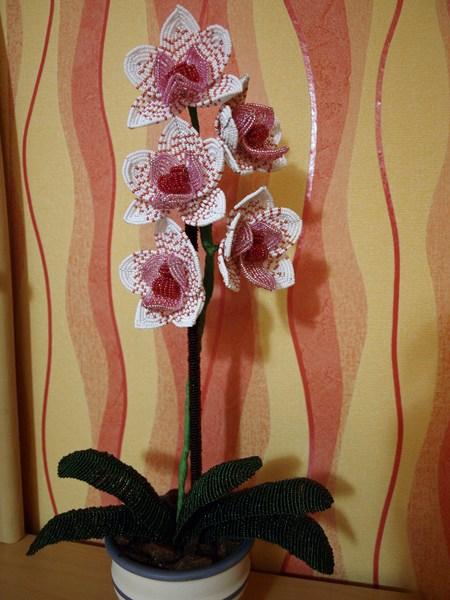 Бисероплетение цветов орхидея.