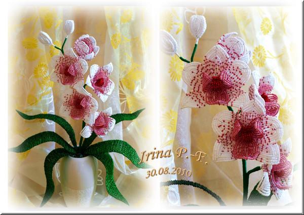 орхидея фаленопсис из бисера.