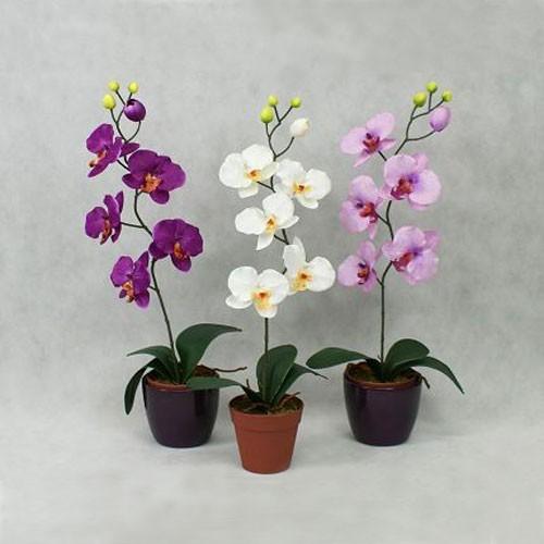 картинка орхидея цветок
