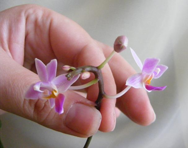 http://content.foto.mail.ru/mail/jenshen/2136/h-2491.jpg