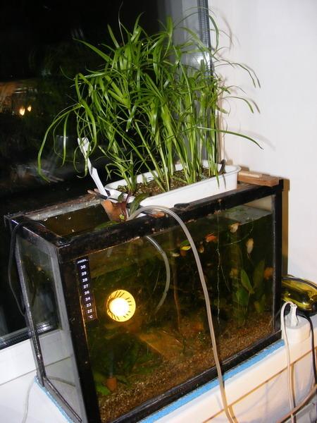 Как сделать биофильтр в аквариуме
