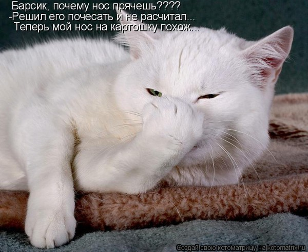 Фотография Нос чешется к празднику. из раздела животные 3014103 - фото.сайт - Photosight.ru