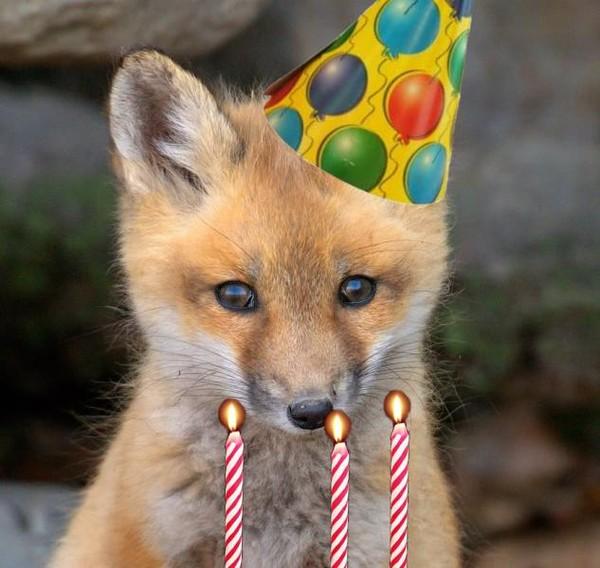 Поздравление с днем рождения для лиса 856