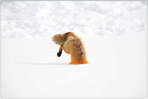 http://content.foto.mail.ru/mail/karelina-natalia/_blogs/i-16215.jpg