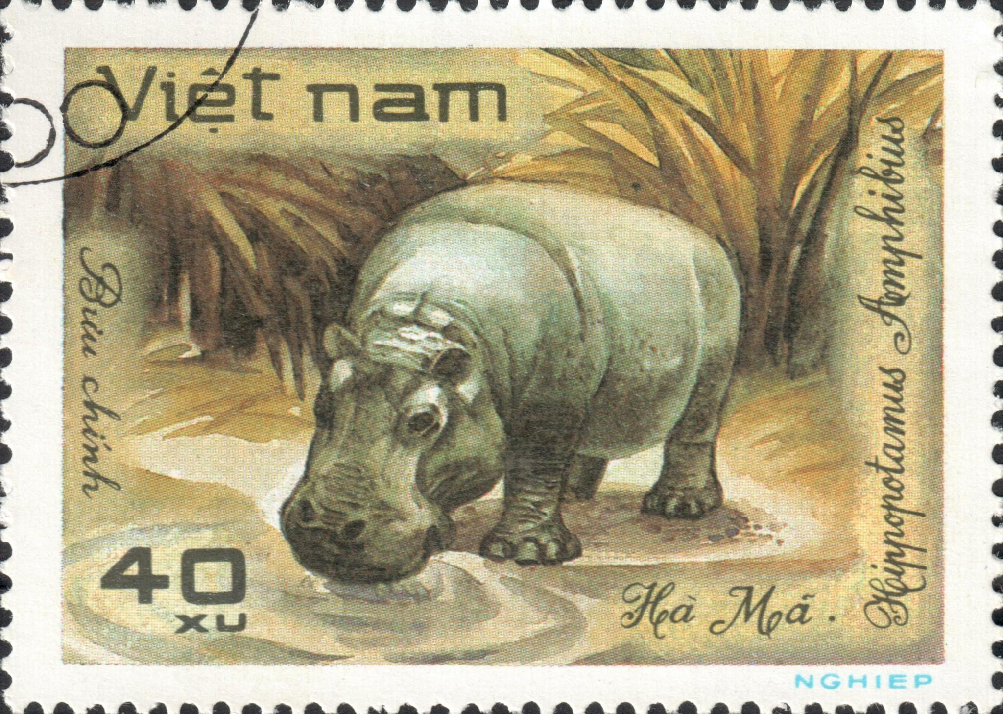 Обыкновенный бегемот, или гиппопотам (Hippopotamus amphibius)