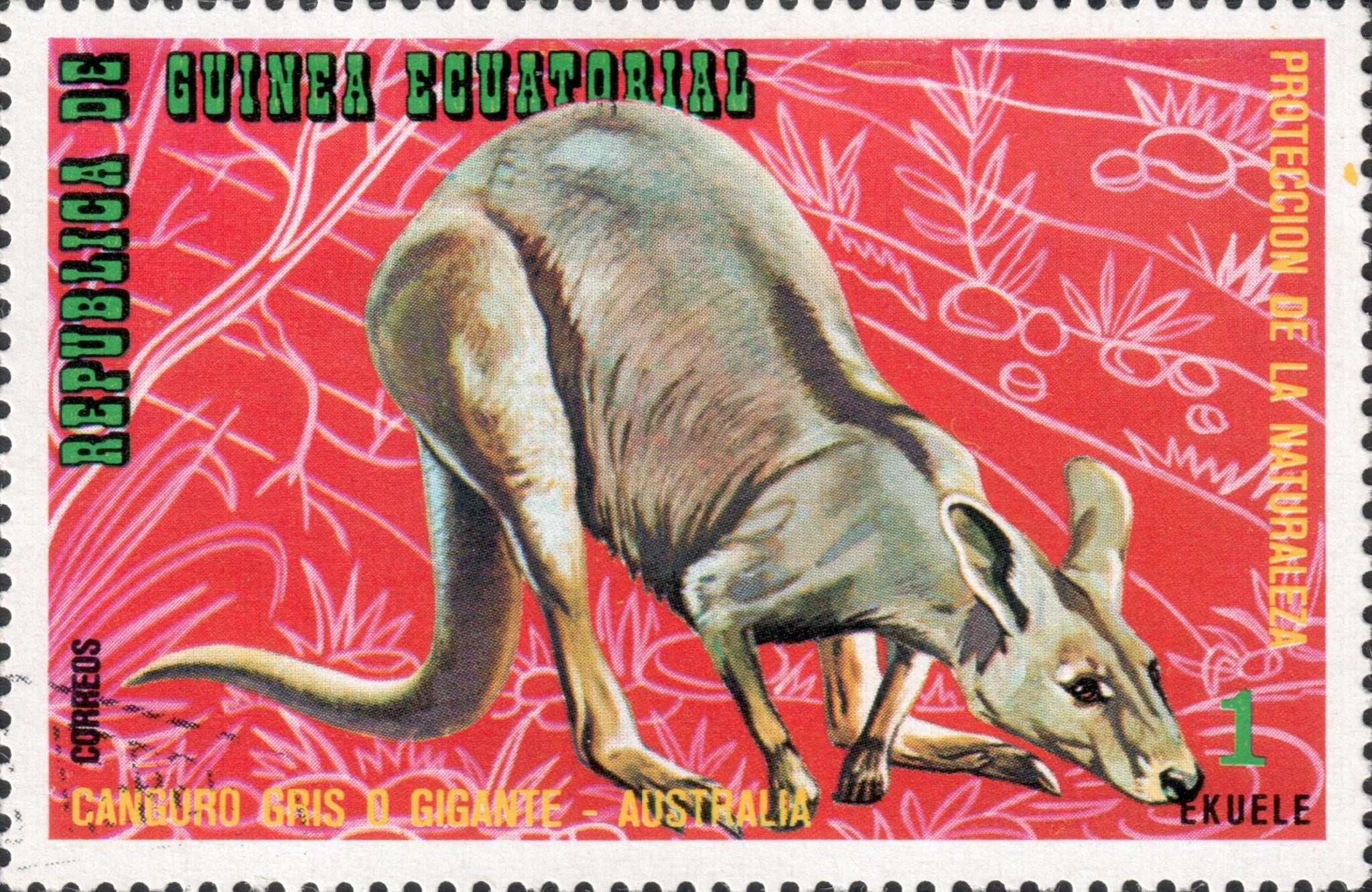 Гигантский кенгуру (Macropus giganteus)