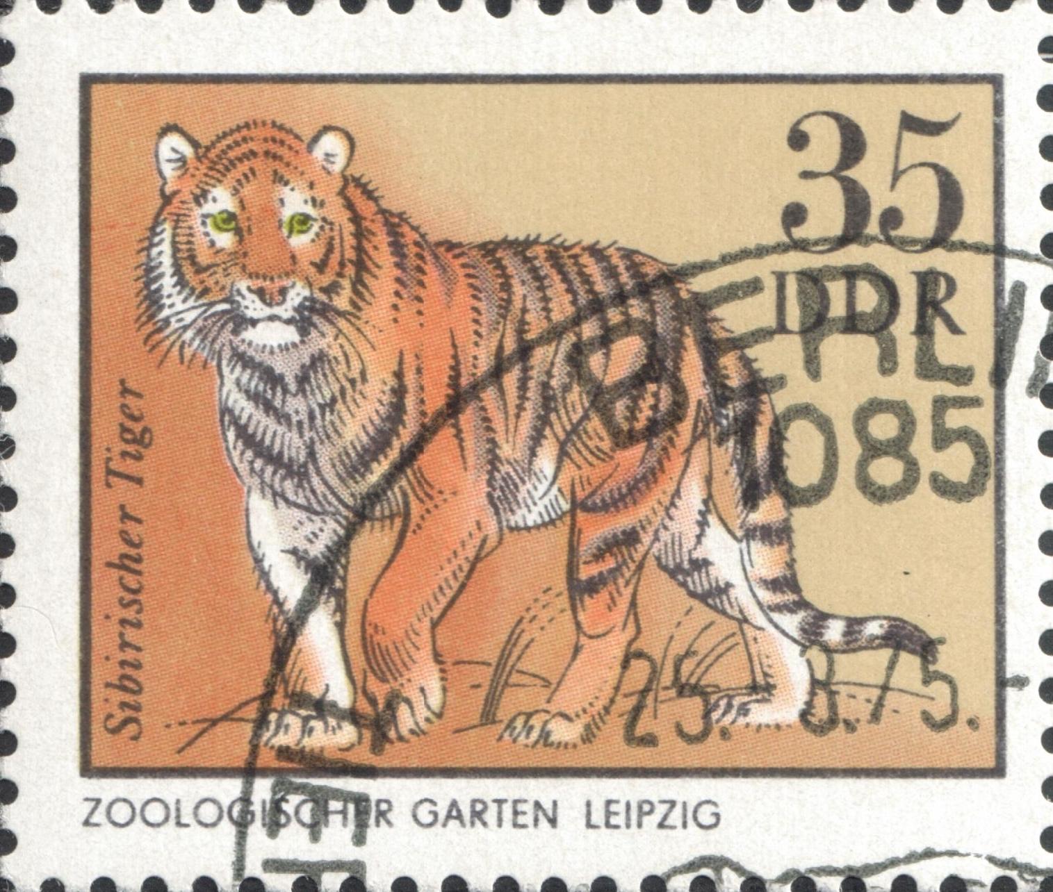 Амурский тигр. Лейпцигский зоопарк