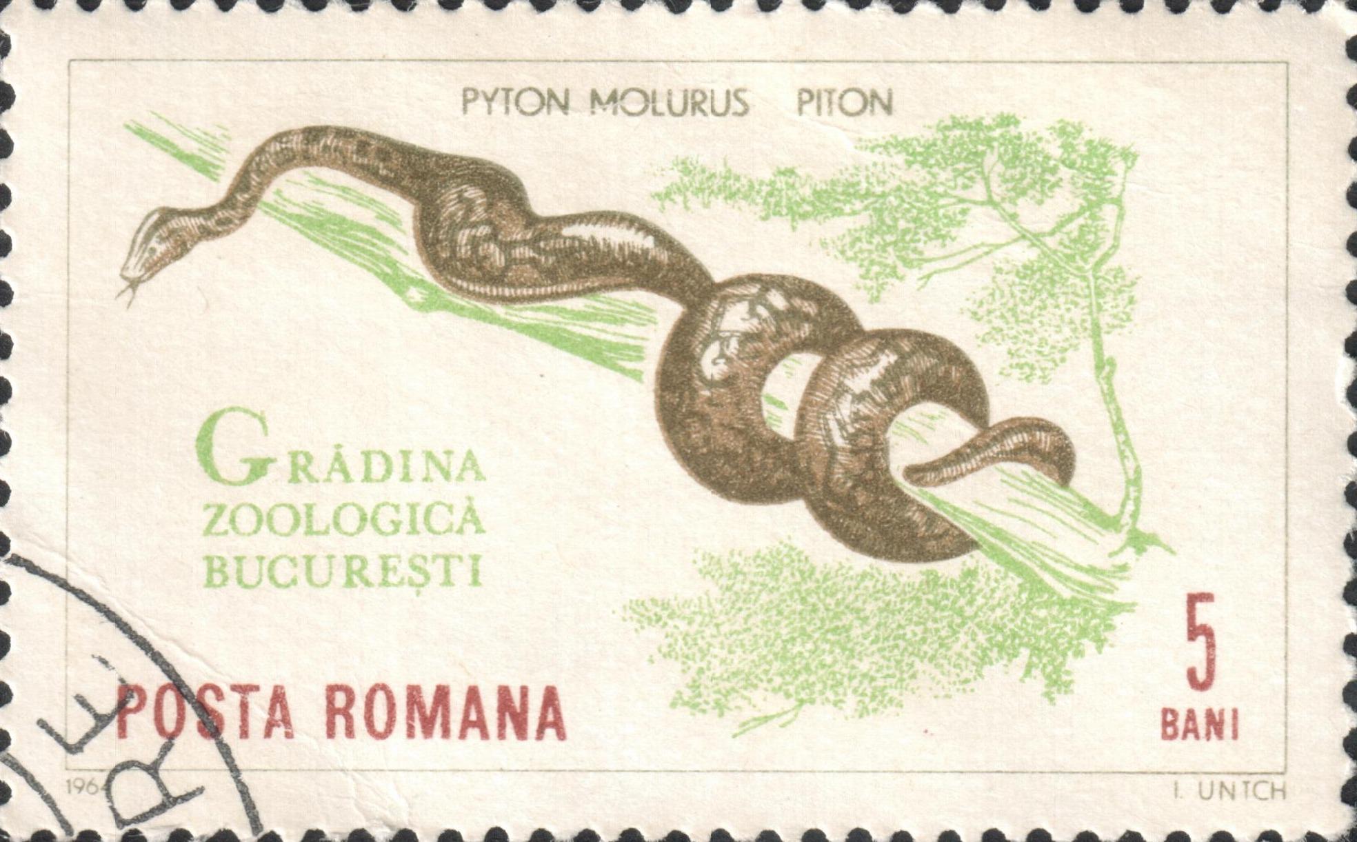 Тигровый питон (Python molurus)