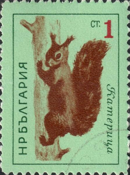 Белка в Болгарии называется - катерица