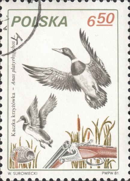 Почтовая марка с изображением охоты на крякв. Польша, 1981 год