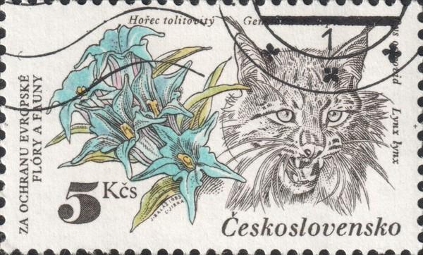 Обыкновенная рысь (Lynx lynx)