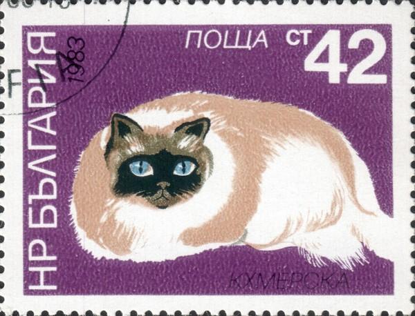 Кхмерская кошка