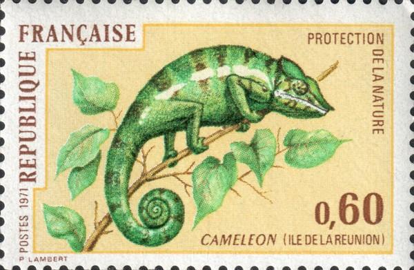 Хамелеон (Cameleon)