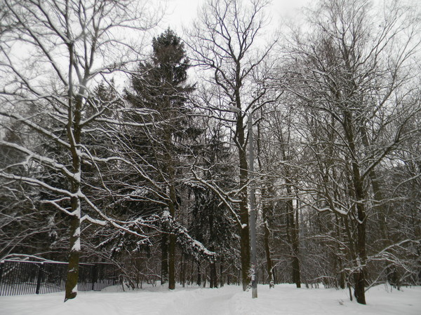 Парк в Северном