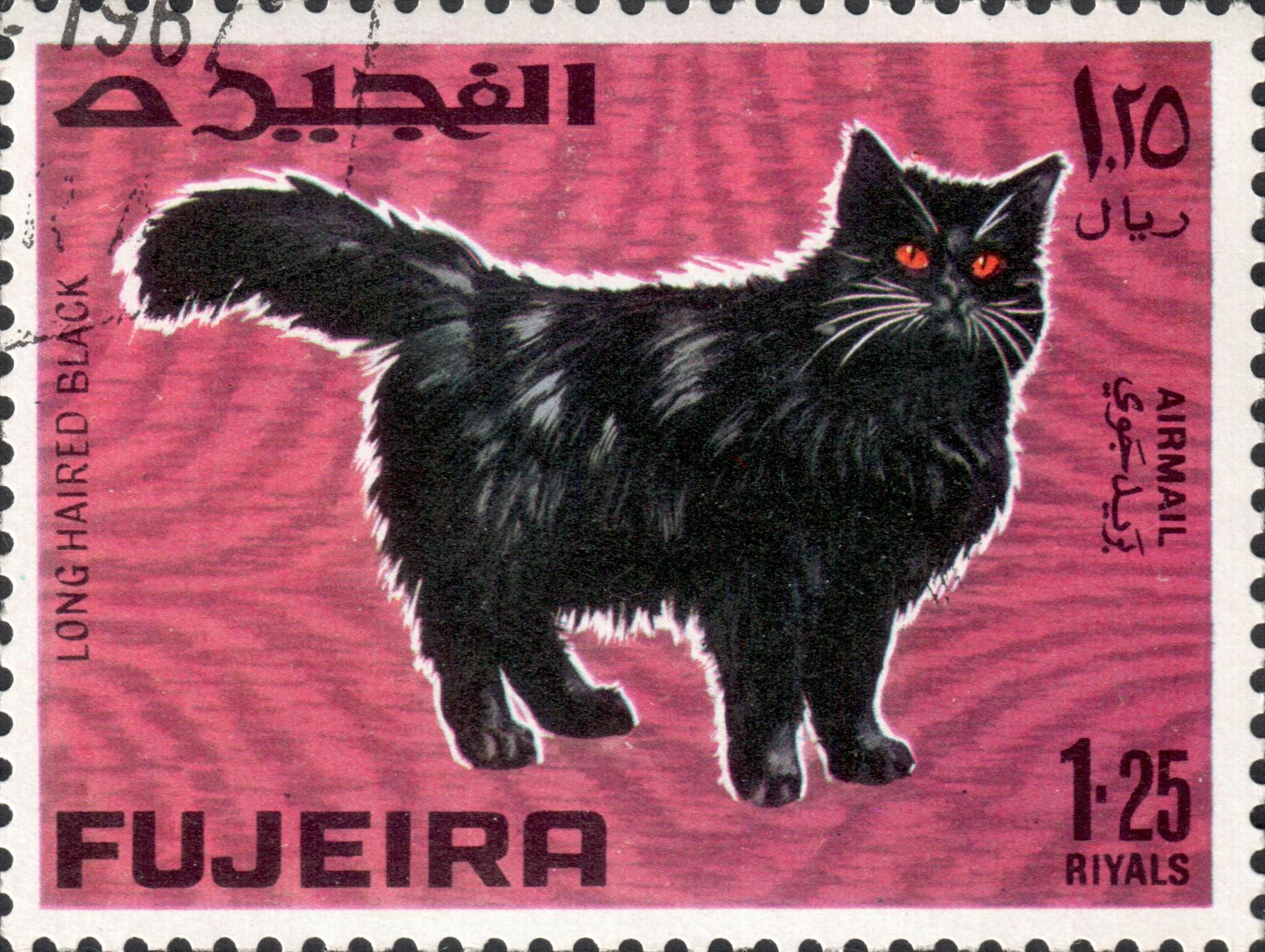 Длинноволосый чёрный (Long haired black)