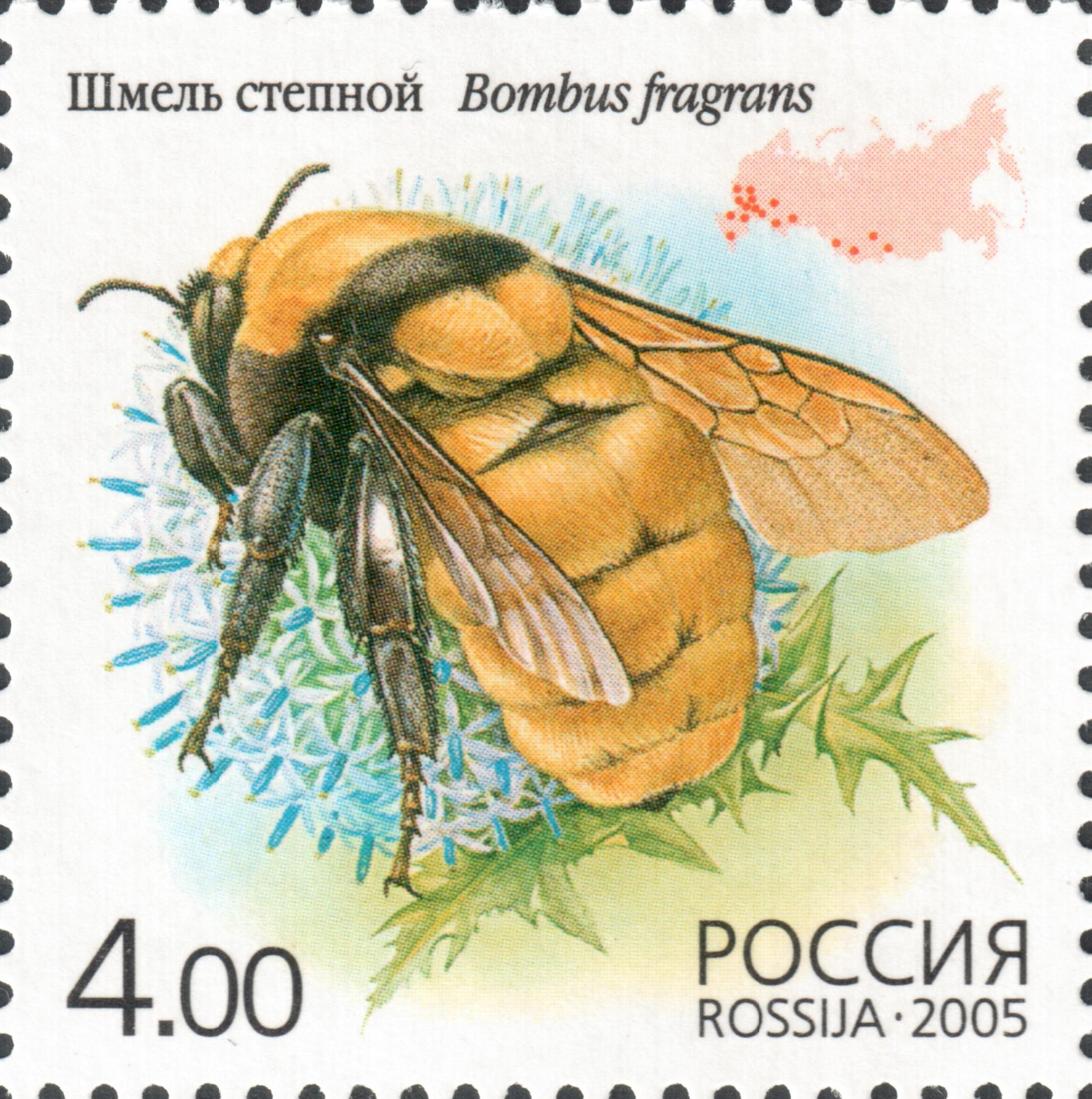 Шмель степной (Bombus fragrans)