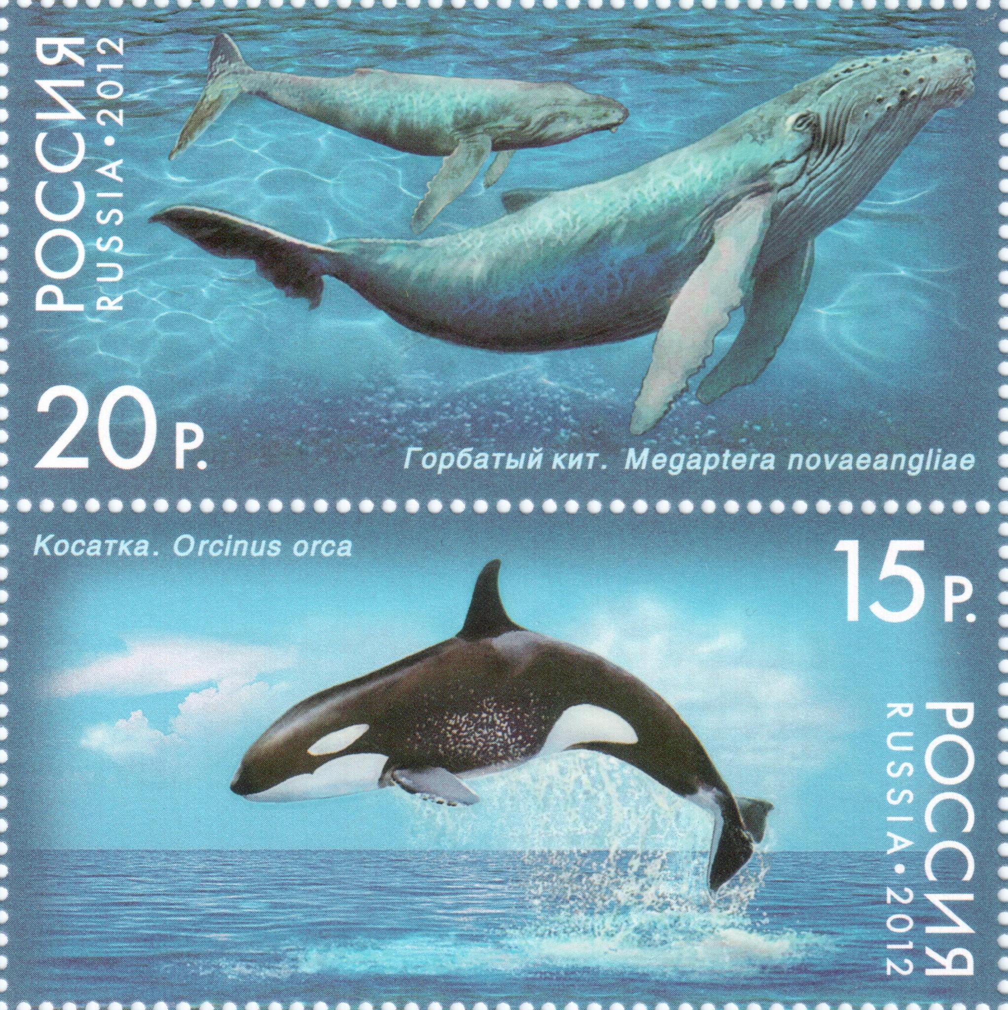 Горбатый кит и косатка