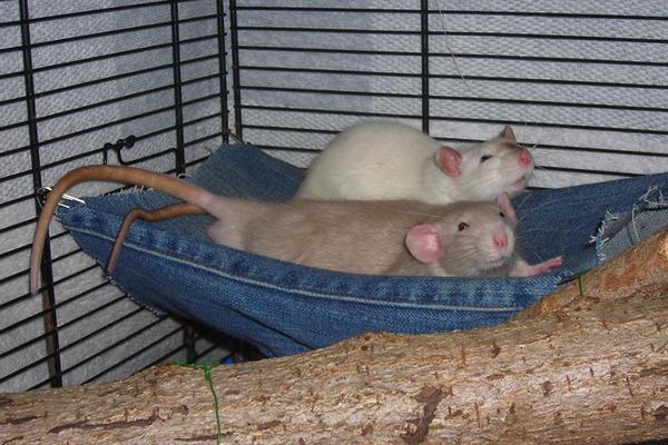 Гамаки крысы своими руками