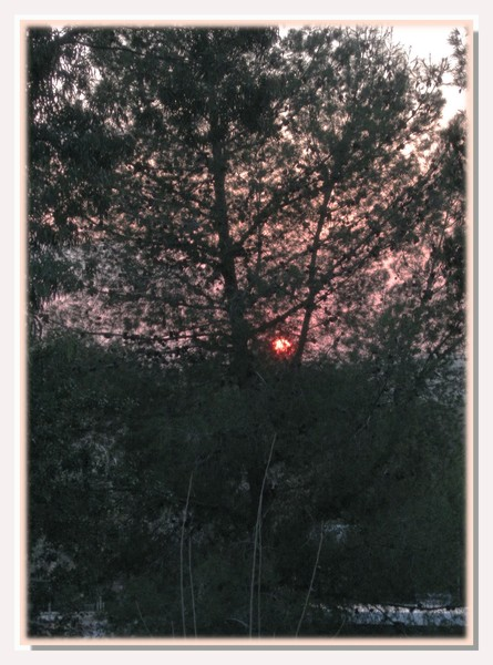 Проводы солнца в канун ТУ БИШВАТ (Новый Год Деревьев)
