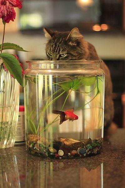 кот ловит рыбку в аквариуме