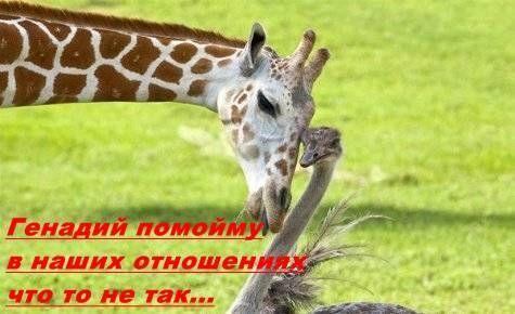 Улыбнуло)))) 626