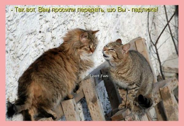 Улыбнуло)))) 024