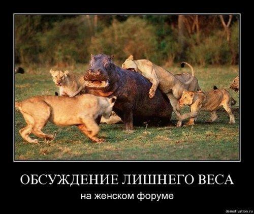 Улыбнуло)))) 480