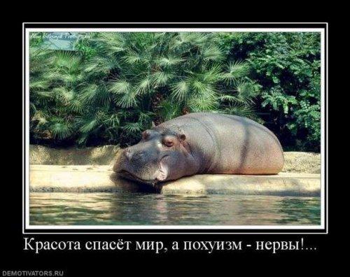 Улыбнуло)))) 042
