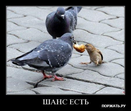Улыбнуло)))) 644