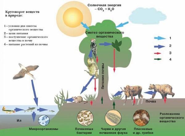 Помогите рассказ про биологический круговорот в природе.  Дочке ОЧЕНЬ НУЖНО!