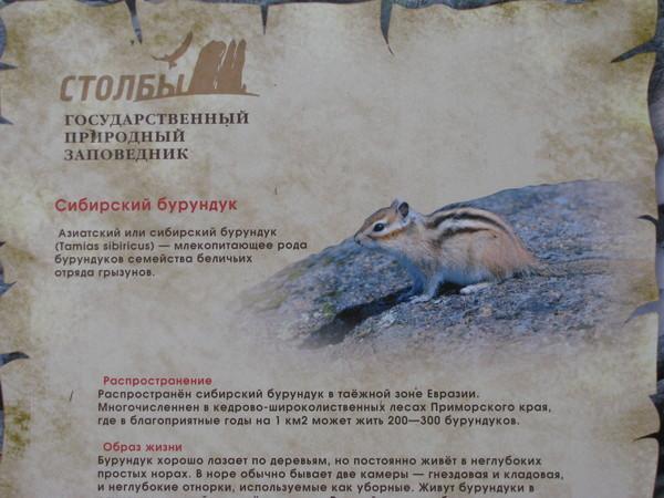 http://content.foto.mail.ru/mail/ksruss/13556/i-13791.jpg